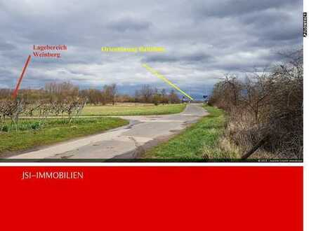 Zweiter noch verfügbarer Weinberg in guter Lage im Bereich Bad Dürkheim / Ungstein