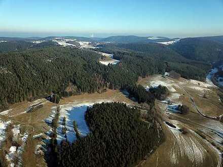 5 ha Forst- und Landwirtschaftsflächen im Thüringer Wald