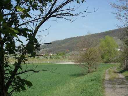 Wertanlage - 1.630 qm BGr. für EFH oder Mehrgenerationenhaus - Blick auf die Pillnitzer Weinberge
