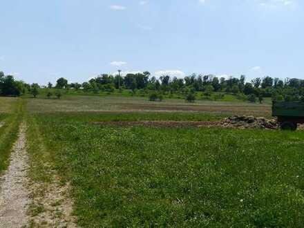 Landwirtschaftliche Wiesenflächen in Roßwälden