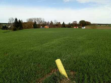 Landwirtschaftliches Grundstück 17.001 qm (PROVISIONSFREI)