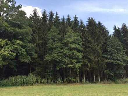 **Top gepflegtes Waldgrundstück** Schlagreifer Fichtenbestand**