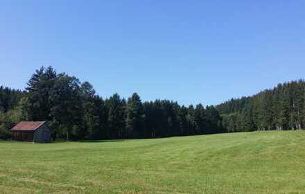 Investieren Sie in die Zukunft - gepflegter Mischwald in Fuchstal-Leeder