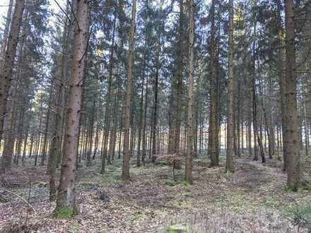 Gut erschlossene Waldfläche bei Schmitzdorf