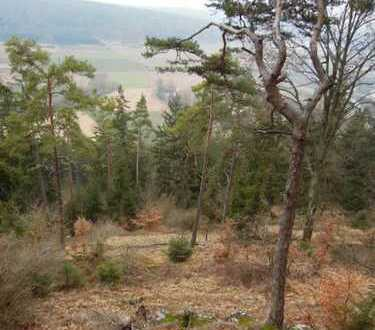 Forstwirtschaftliches Grundstück - Gemarkung Kinding