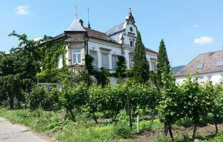schöne, helle, neu renovierte, 3 Zimmer + Küche/Bad Wohnung in historischem Anwesen in Maikammer