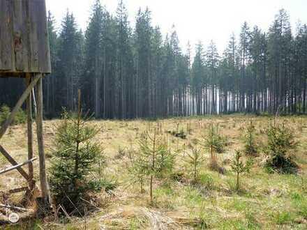 *Anlage mit Weitblick* Waldgrundstück für Naturliebhaber