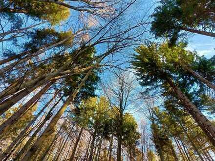 BERGWALDGRUNDSTÜCK 82441 OHLSTADT, ca. 2 ha unter dem Heimgarten, die Holzpreise steigen!