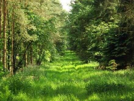 Gemeinde Großenkneten: 1,9 ha Waldfläche zu verkaufen