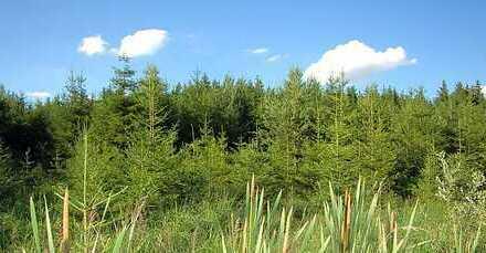 Waldgrundstück ca. 17.000 m²