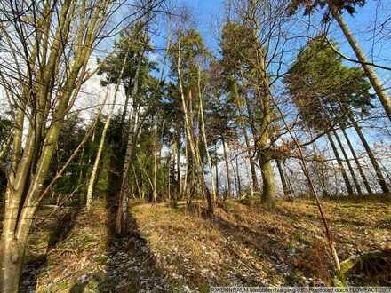 Mitten in der Natur: Herrliches Baugrundstück direkt am Waldrand
