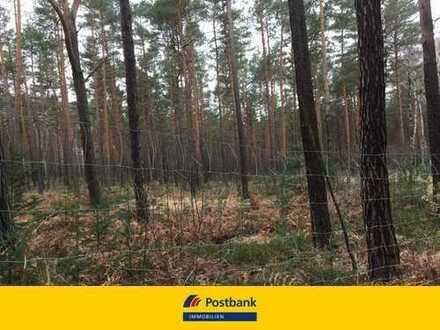 4,5 ha Waldflächen in der Dahlener Heide