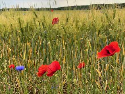 Freiheit mit Weitblick über die Felder!