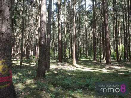 Wald in Hörzhausen
