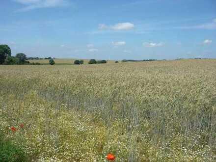 5,5 ha Landwirtschaftsfläche bei Herzsprung an der A24 in Brandenburg!