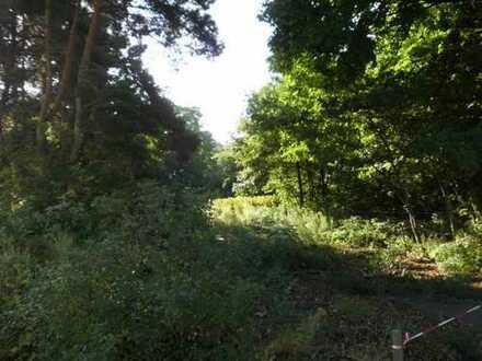 schönes Grundstück in Bad Sachsa - Randlage - Am Bachlauf