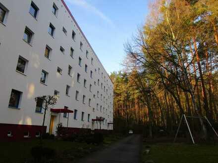 Sonnige, ruhige 3 Zimmer EG Wohnung im Grünen - Potsdam