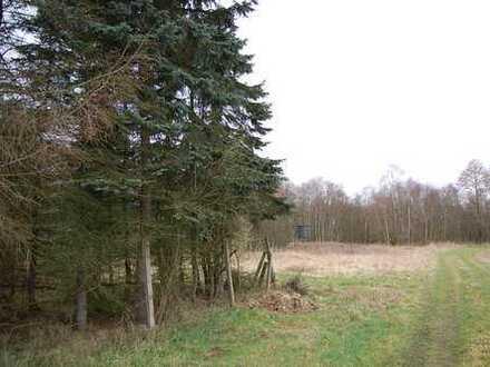 Freizeitgrundstück mit Wald und Teich in Wollingst