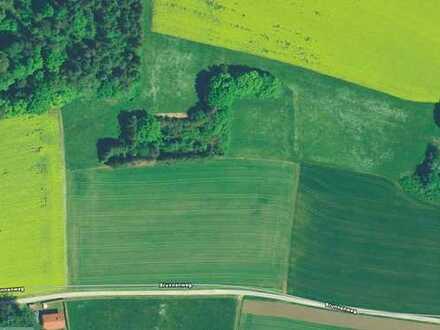 Gartengrundstück am Hang 42.000 m2 umzäunt in Zandt