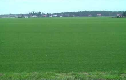 Baugrundstück 3000 m² in Damsdorf - Sehr gute Lage