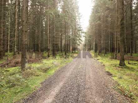 Wertanlage auf Rügen: Weitläufiges Waldgrundstück - über 7.500 m² Fläche