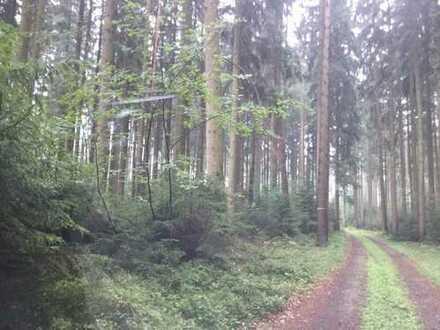 Schöne Waldfläche bei Aitrach
