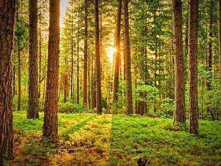 *** Waldgrundstück in Arnstorf ***