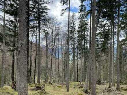 Ohlstadt - Eschenlohe - Hühnertal - Bergwald zu kaufen