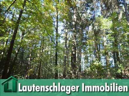 Großer gepflegter Mischwaldbestand zwischen Pirkach und Batzhausen