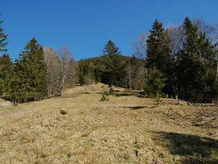 Rarität in den Ammergauer Alpen! Extra großes landwirtschaftliches Grundstück mit Waldbestand in Han