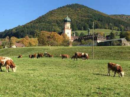 Münstertal - Schwarzwaldhaus mit herrlicher Aussicht