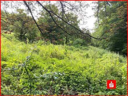 Zwangsversteigerung Landwirtschaftliches Grundstück in Burgsinn