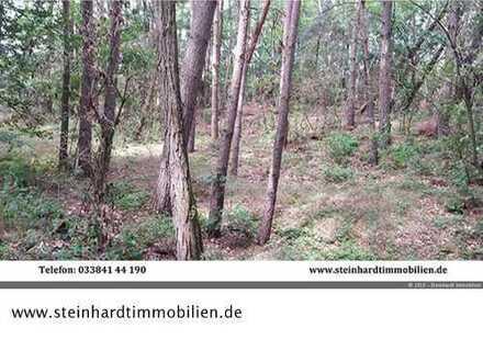 2,4 ha forstwirtschaftlich genutzte Flächen