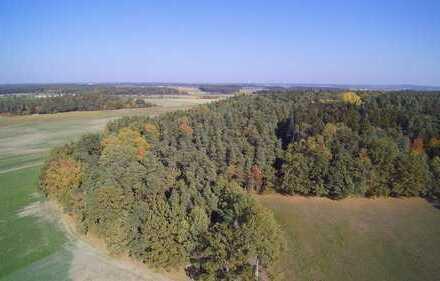 Wald Flächen