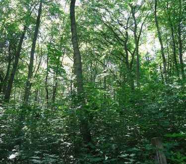 Mischwaldgrundstück am Erfurter Stadtrand mit einem guten alten Baumbestand