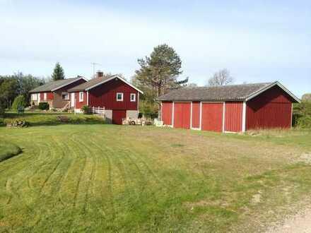 Schwedische Ruh in Kommun Markaryd,Sūd-Schweden