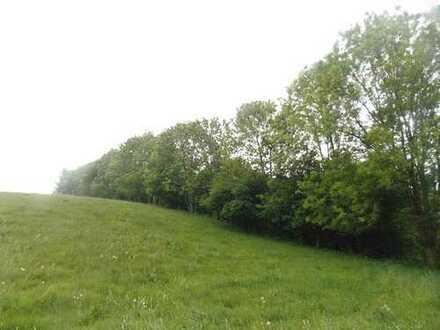 Waldfläche bei Hainichen