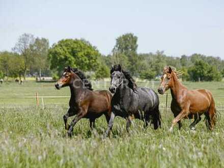 Exklusiver Pferdehof mit guter Autobahnanbindung!