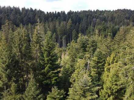Waldbesitzer aufgepasst - Waldfläche mit 7,6 Hektar!