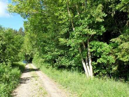 Wald zwischen Ammersee und Lech