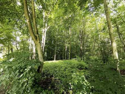 21 ha Waldflächen