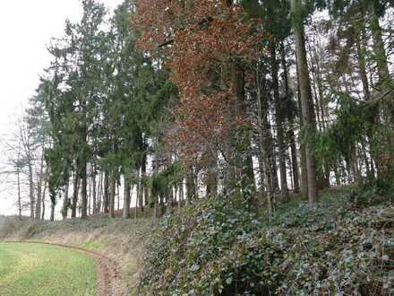 Waldfläche Nähe Taubenbach (LK Rottal-Inn)