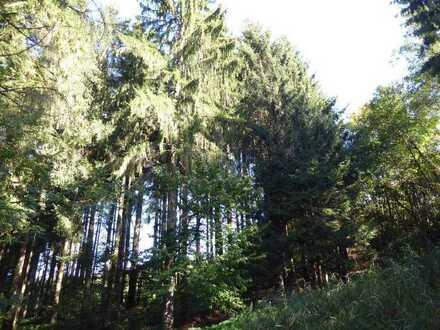Waldflächen: