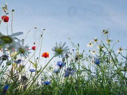 Sie schätzen die Natur, einen großen Garten