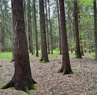 Ebener Wald mit guter Zufahrt