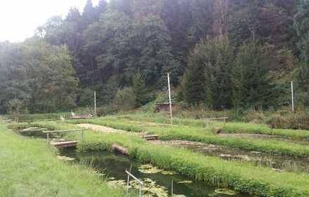 **Fischzuchtanlage mit 14 Teichen, Versorgungshaus und Wasserrechten zu verkaufen !!!**