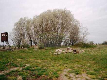*Kleine freie Wiesen- und Ackerflächen in der Natur!*