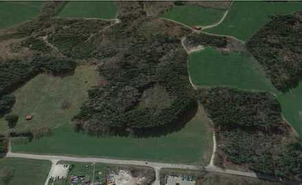 Waldfläche mit gesundem Baumbestand bei Diessen am Ammersee zu verkaufen!