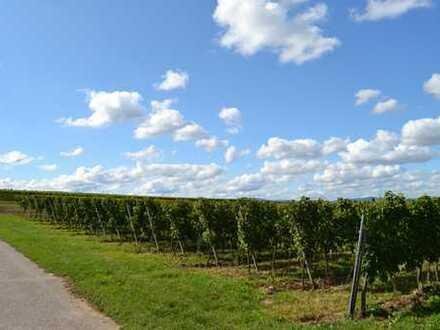 Winzer und Kapitalanleger aufgepasst! Großer sonniger Weinberg in Ortsrandlage Weingarten