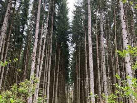 Wunderschöner Wald 4000m² mit altem Baumbestand nur EUR 40000